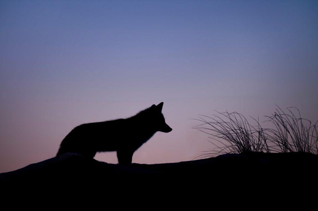 La luna del lobo