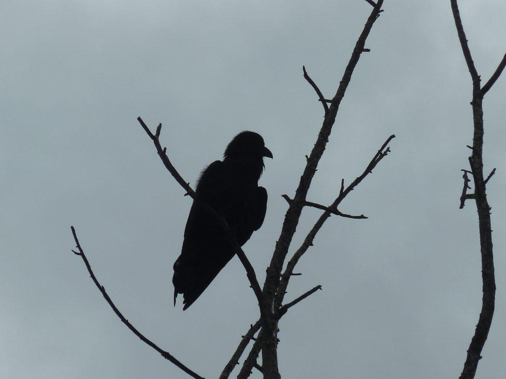 La luna del cuervo