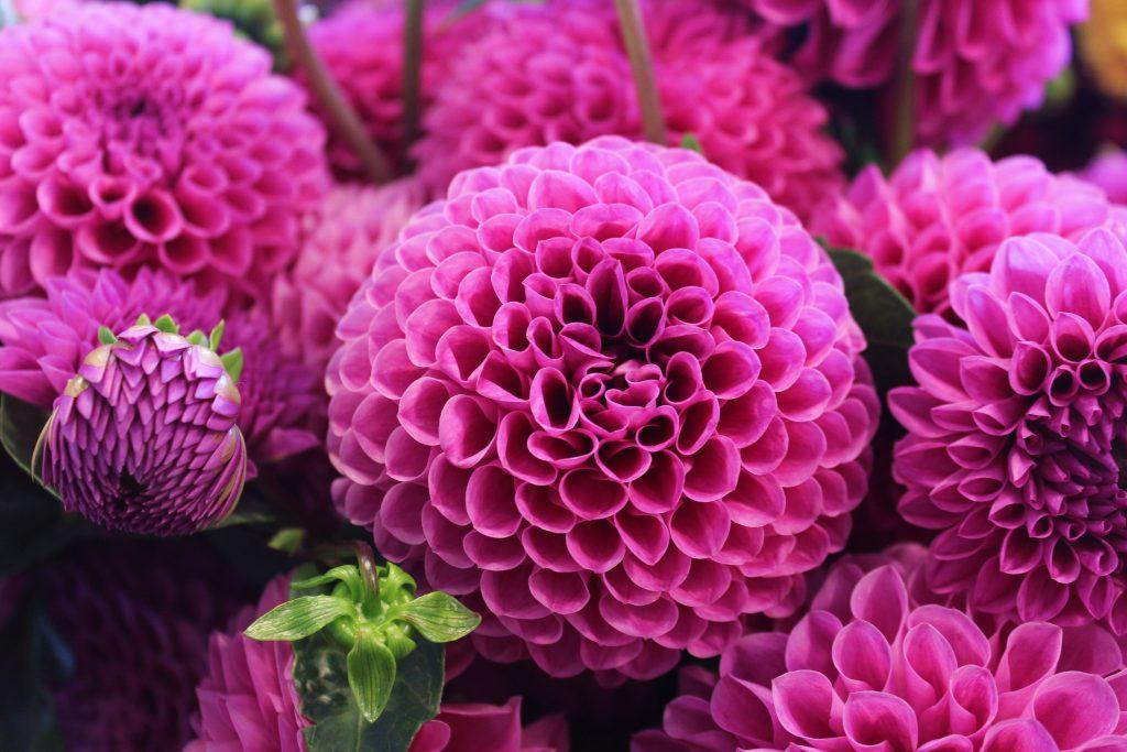 La mitología y las flores